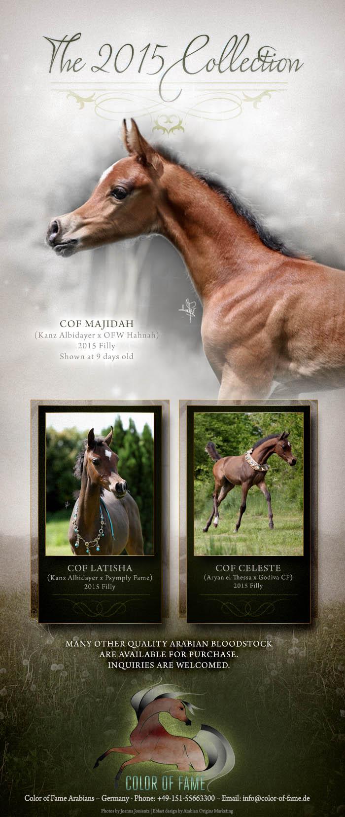 News 2 COF Foals 2015