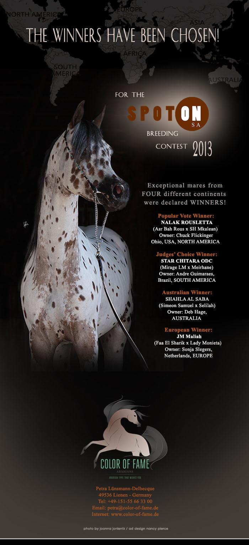 News 8 Spot On SA 2013