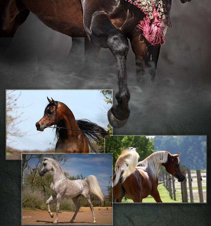 stallion-blast-2017