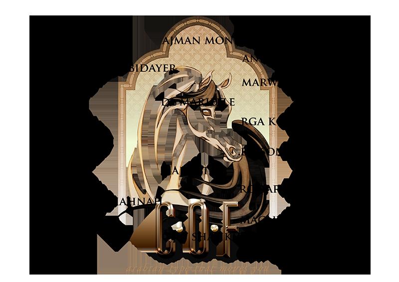 majidah_pedigree_800x566